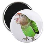Cape Parrot 1 Magnet