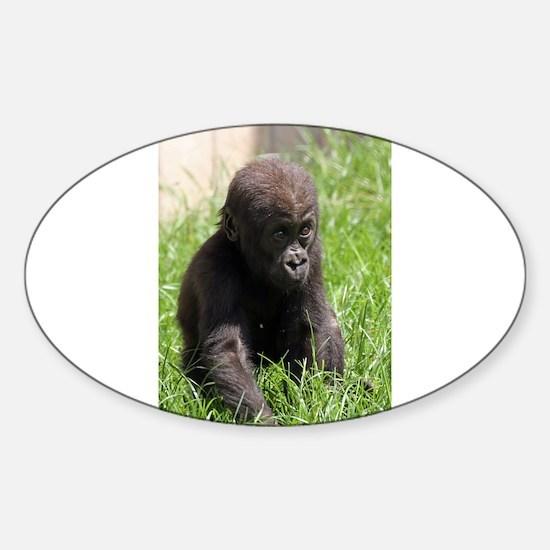 Gorilla-Baby002 Decal
