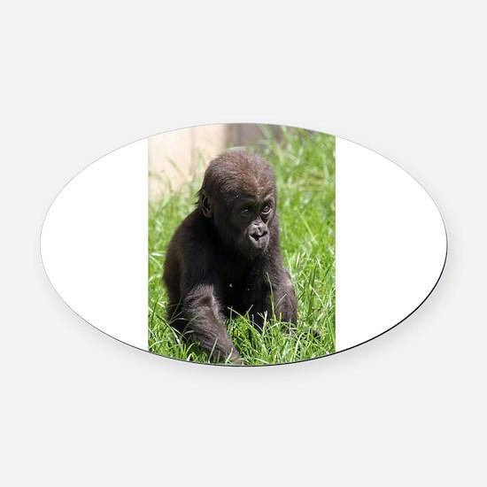 Gorilla-Baby002 Oval Car Magnet