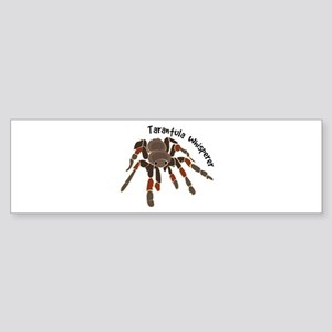 Tarantula Whisperer Bumper Sticker