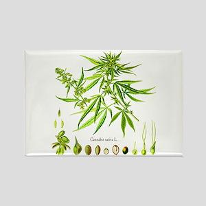 Cannabis Sativa L. Rectangle Magnet