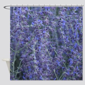 Lavender plants Shower Curtain
