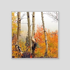 "Misty Autumn Aspen 2 Square Sticker 3"" x 3"""
