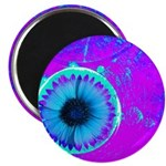 Purple Blue Magnets