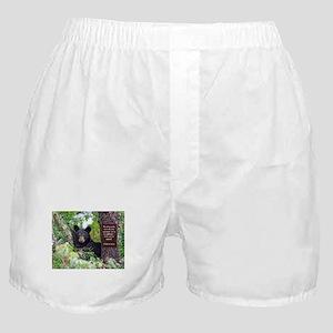 Baby Black Bear - Psalms 62-6 Boxer Shorts