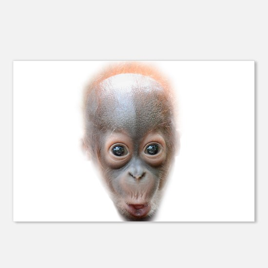 Funny Baby Orangutan Face Postcards (Package of 8)