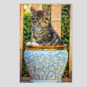 Pot Of Baby Kitten Postcards (Package of 8)