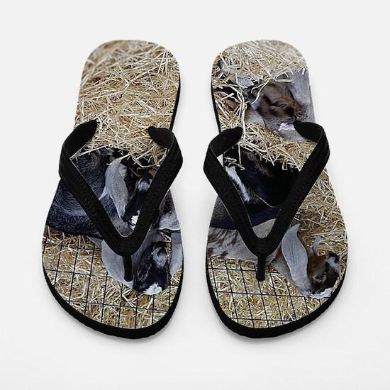Cute Baby Goats Flip Flops
