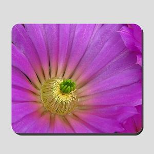 Purple cactus blossom mousepad