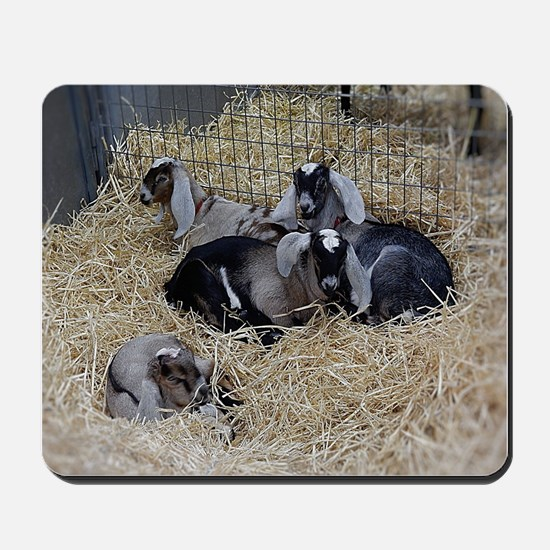 Cute Baby Goats Mousepad