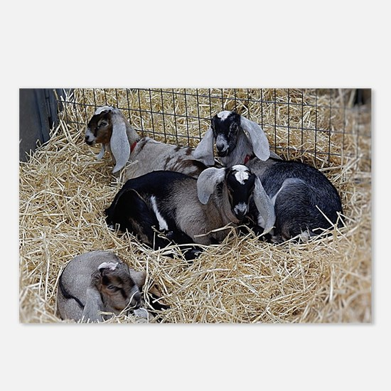 Cute Baby Goats Postcards (Package of 8)