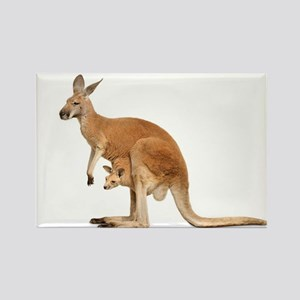 kangaroo Magnets
