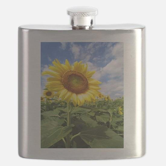 Sunflower Garden Flask