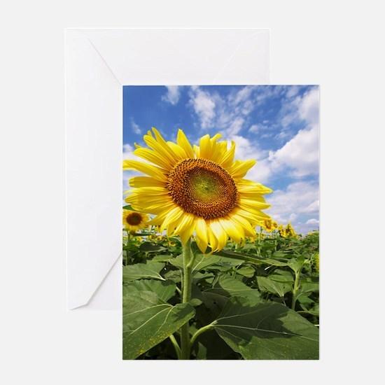 Sunflower Garden Greeting Cards
