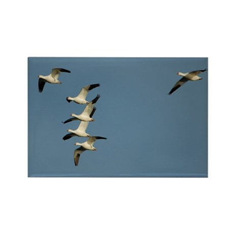 Snow Geese Rectangle Magnet (10 pack)