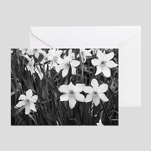 B&W daffodil - Sympathy cards (6/pkg)