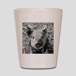 Sweet Piglet,black white Shot Glass