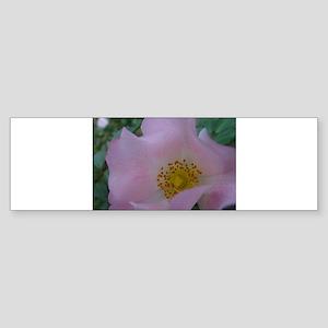 Full Bloom Pink Rose II Bumper Sticker