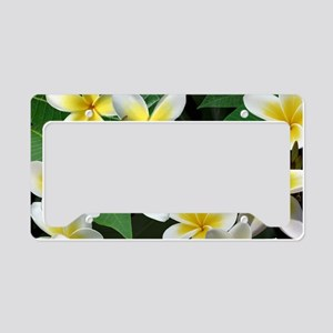 Plumeria Flowers License Plate Holder