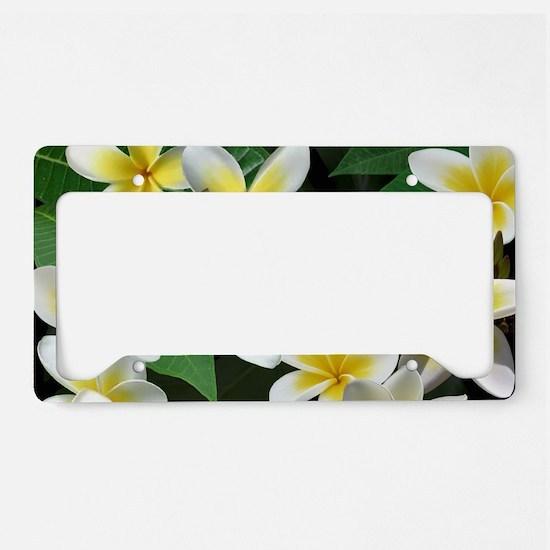 Plumeria Flowers License Plate Holder