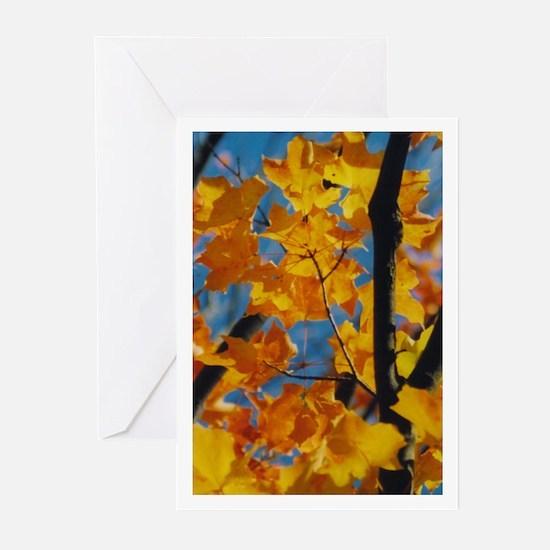 camara yellowMaple Greeting Cards (Pk of 10)