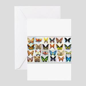 Bitterflies no text Greeting Cards