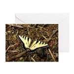 Summer Tiger Swallowtail Butterfly Greeting Cards