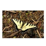 Summer Tiger Swallowtail Butterfly Postcards (Pack