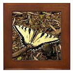 Summer Tiger Swallowtail Butterfly Framed Tile