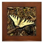 Summer Tiger Swallowtail Butterfly Framed Tile