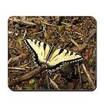 Summer Tiger Swallowtail Butterfly Mousepad