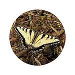 Summer Tiger Swallowtail Butterfly 3.5