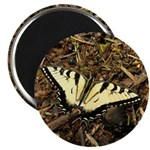 Summer Tiger Swallowtail Butterfly Magnets