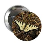 Summer Tiger Swallowtail Butterfly 2.25