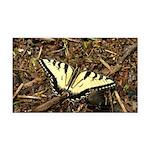 Summer Tiger Swallowtail Butterfly Rectangle Car M