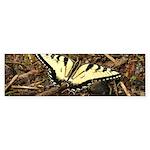 Summer Tiger Swallowtail Butterfly Bumper Sticker