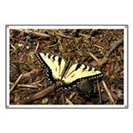 Summer Tiger Swallowtail Butterfly Banner