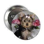 Yorkie puppy Button!
