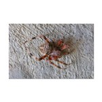 Crab Spider Home Posters