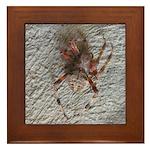 Crab Spider Home Framed Tile