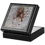 Crab Spider Home Keepsake Box