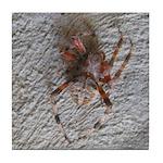 Crab Spider Home Tile Coaster