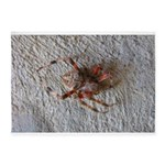 Crab Spider Home 5'x7'Area Rug