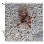 Crab Spider Home Shower Curtain