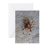 Crab Spider Home Greeting Cards