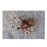 Crab Spider Home Postcards (Package of 8)