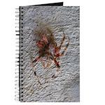 Crab Spider Home Journal