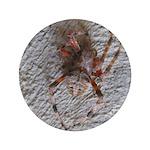 Crab Spider Home 3.5