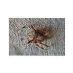 Crab Spider Home Magnets