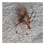 Crab Spider Home Square Car Magnet 3